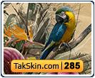قالب وبلاگ سه ستونه گرافیکی طوطی – قالب شماره ۲۸۵